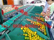 水果分选设备-火龙果选果机