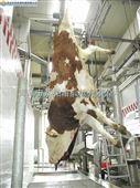 牛沥血线-牛屠宰设备