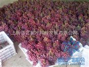 水果在冷藏库中的储藏温度以及管理